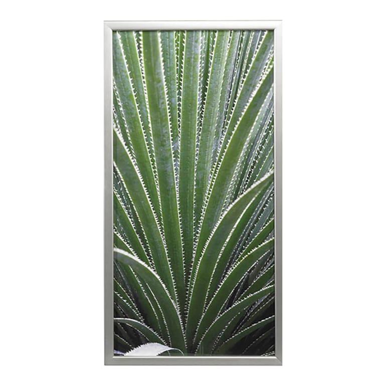 Cactus Celery