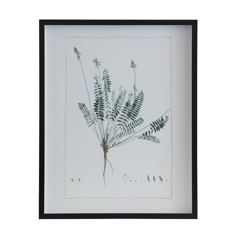 Botanical 243B