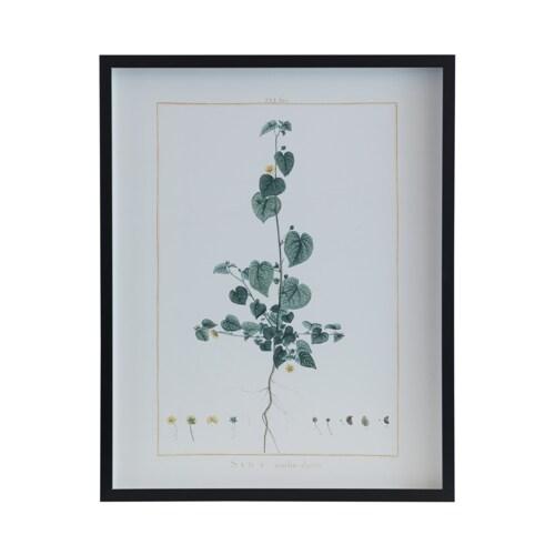 Botanical 243I