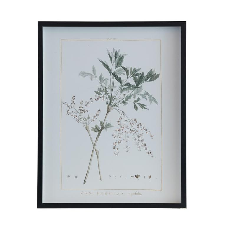 Botanical 243J